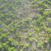 Róm - vetur; ljósmynd á sýningu í Anima gallerí í janúar 2007