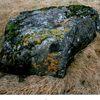 Stone (Steinn)